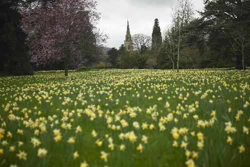 Garden Visit: Daffodil Days at Madresfield Court - Gardenista