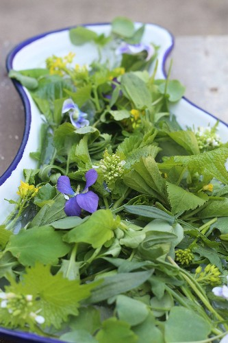 Weeds You Can Eat: Ground Elder