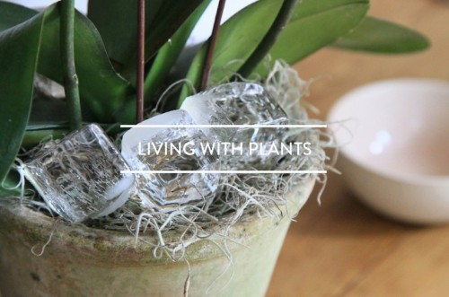 Table of Contents: Living with Plants