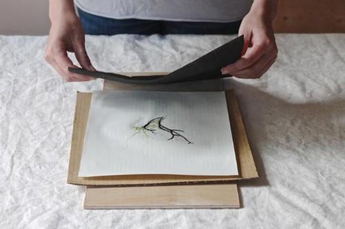 Summertime DIY: Pressed Seaweed Prints