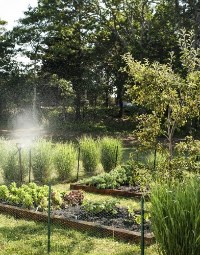 The Garden Decoder: What Is 'Companion Planting'?