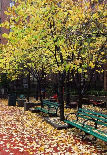 Fall Foliage 101: Why Some Autumns are More Colorful