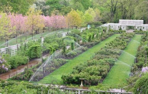 Insider's Tour: Secrets of the Brooklyn Botanic Garden - Gardenista