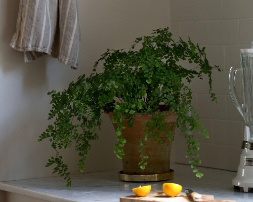 The Garden Decoder: What Do 'Low Light' Conditions Really Mean for Houseplants?
