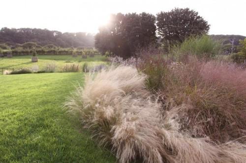 Gardening 101: Stipa Grasses