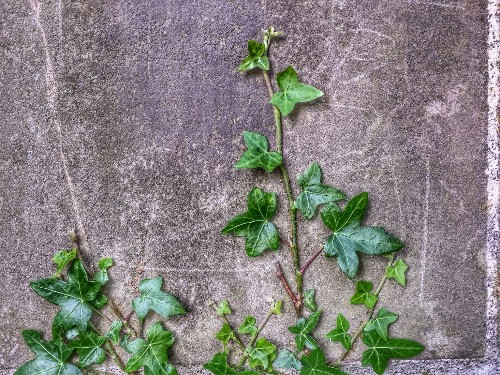 Native Plants: 10 Alternatives to Invasive Garden Invaders