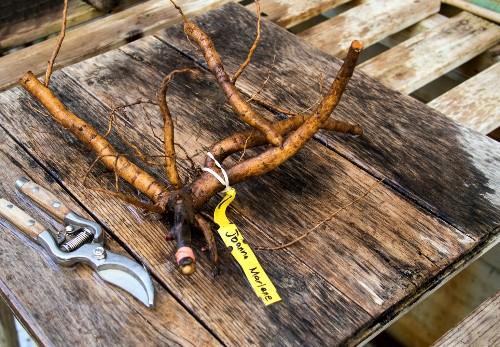 Secrets of an English Head Gardener: How to Transplant Shrubs and Perennials