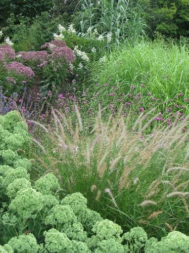 Gardening 101: Fountain Grass