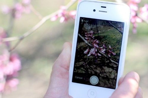 Tech Roundup: Best Apps for Garden Design and to ID Plants