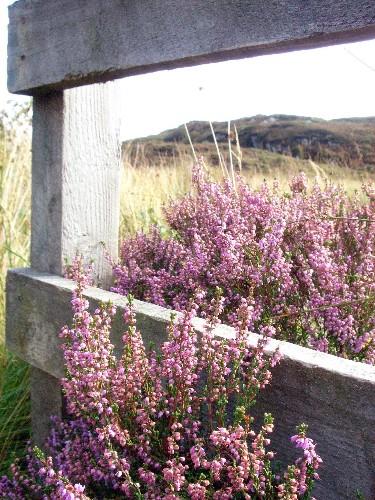 10 Garden Ideas to Steal from Scotland