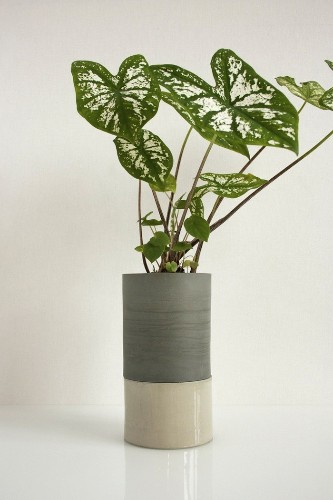 An Irresistible Self-Watering Planter by Light + Ladder