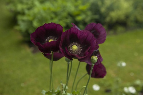 10 Things Nobody Tells You About Annuals
