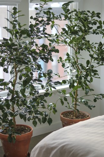 13 Things Nobody Tells You About Indoor Citrus Trees
