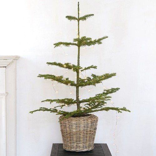 10 Easy Pieces: Tabletop Live Christmas Trees