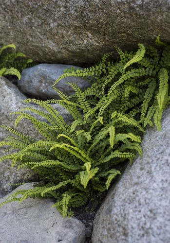 Sneak Peek: Garden Design Magazine's Wild Gardens