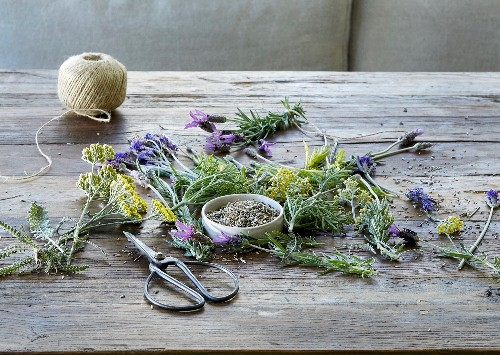 Announcing Our New Guide to Herbs