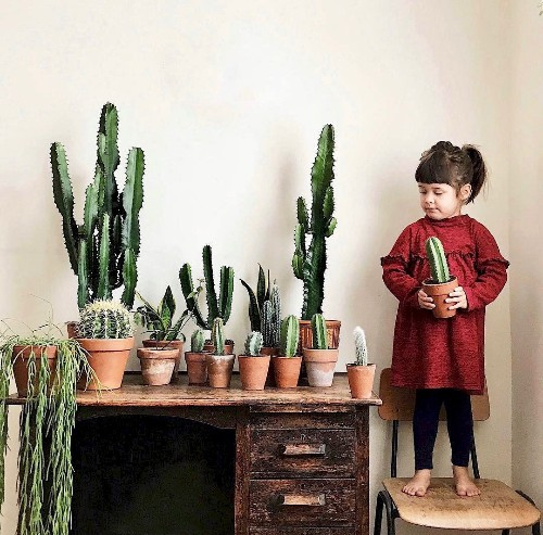 10 Houseplant Lovers to Follow on Instagram