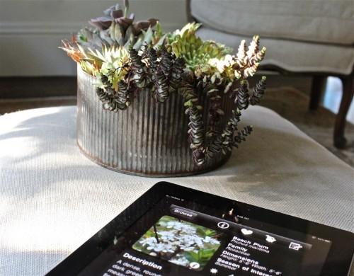 10 Best Garden Design Apps for Your iPad