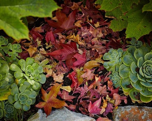 Your First Garden: What You Need to Know About Raking Leaves - Gardenista
