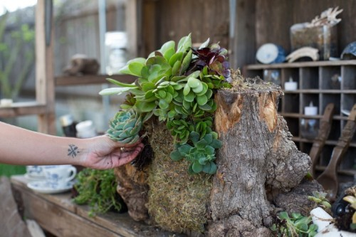 Shopper's Diary: Searoon Succulents
