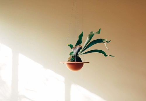 Object of Desire: A Revolutionary Terracotta Pot