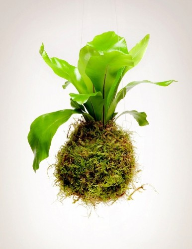 10 Easy Pieces: Kokedama Plants