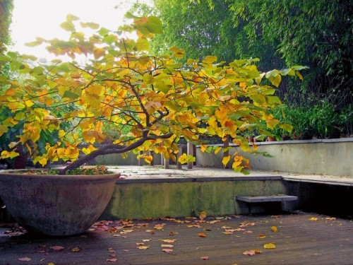 Expert Advice: 7 Tips to Put Your Garden to Bed for the Winter