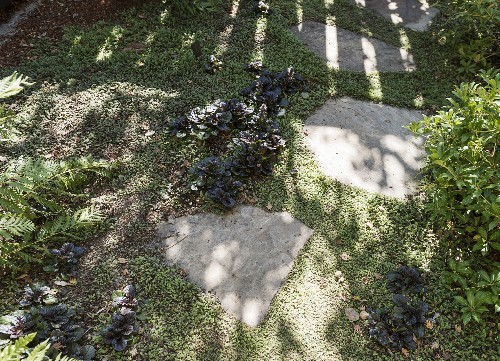 Hardscaping 101: Ground Covers to Plant Between Pavers