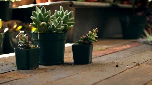DIY Vertical Garden Kit: Just Add Water (and a Wall)