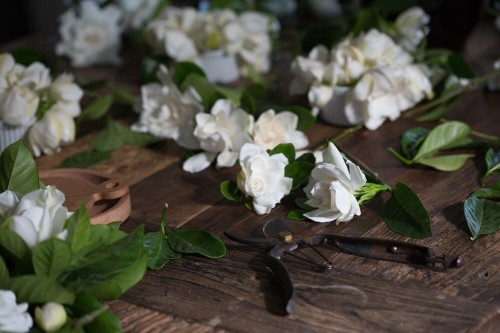 Gardenias: Rethinking a Corsage Flower