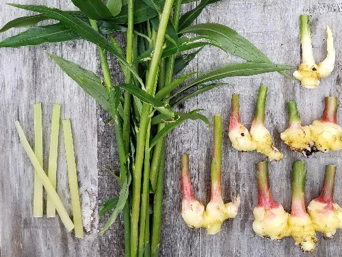 Spice Kit: How to Grow Ginger, Turmeric, and Cardamom at Home