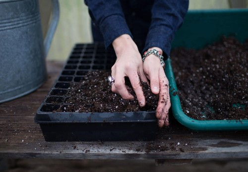 Your First Garden: What You Need to Know Before You Start Seeds