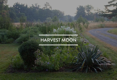 Table of Contents: Harvest Moon