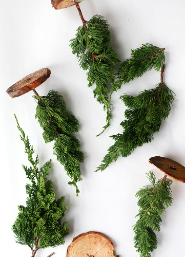 DIY: Miniature Live Christmas Trees