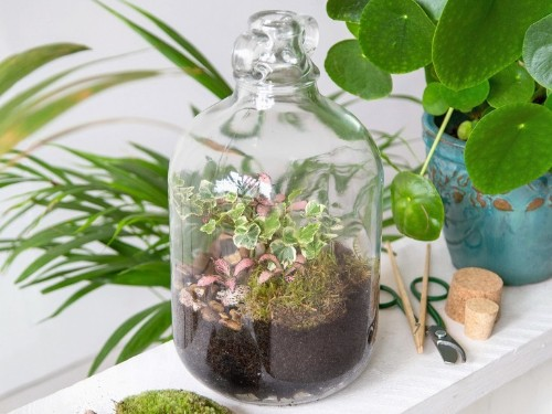 Studio Visit: Gardening Under Glass with Emma Sibley of London Terrariums