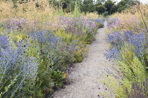 Ask The Expert: How to Plant a Meadow Garden, with James Hitchmough - Gardenista