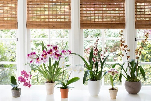 Best Indoor Plants: 6 Flowering Orchids to Grow