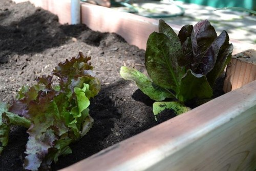 DIY: Simple Tips for Growing Your Own Vegetable Garden