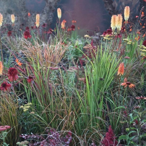 Gardening 101: Japanese Bloodgrass