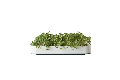 10 Easy Pieces: Countertop Vegetable-Growing Kits
