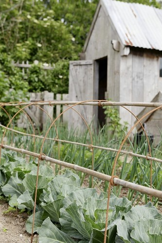 Plant Belles: Wire Supports for the Well Tamed Garden