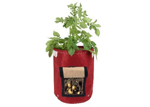 10 Easy Pieces: Potato Growing Kits