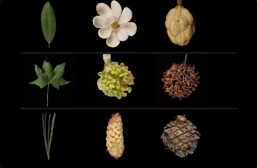 Garden Tech: 10 Essential Flower Apps to ID Plants and Leaves