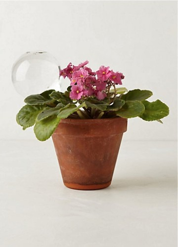 A Stylish Way to Water Plants While You're Away