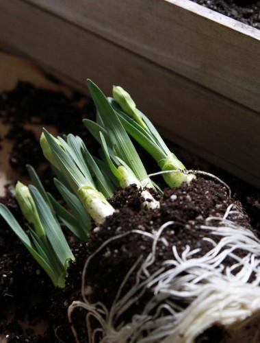 Houseplant Help: Is It OK to Reuse Potting Soil? - Gardenista