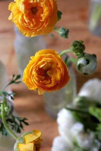 Frugal Flowers: How to Make Supermarket Ranunculus Look Like a Million Bucks