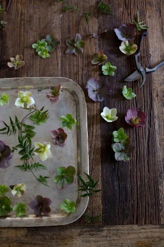 Cut Flowers: How to Help Hellebores Last Longer - Gardenista