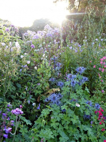 Garden Visit: Flower Borders in a Colorful English Garden, Tattenhall Edition