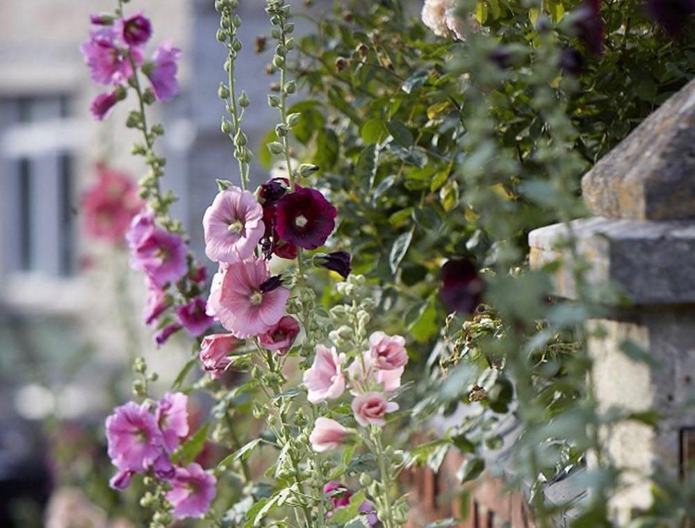 English Gardens - cover