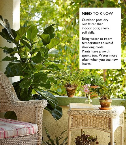 Gardening 101: How to Water a Potted Plant